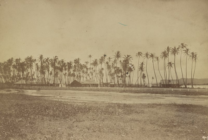 Kamehameha V property at Helumoa, Waikiki, Hawaii in 1880, from- Hawaii album, p. 1, palm trees and buildings LCCN2016651389 (cropped)