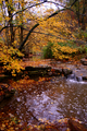 Kellys-creek - West Virginia - ForestWander.png
