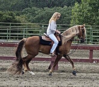 Kentucky Mountain Saddle Horse - Image: Kentucky Mountain Horse