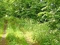Kerzendorf - Wanderweg (Footpath) - geo.hlipp.de - 37957.jpg