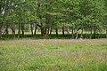 Keutschacher Moor 20, Naturerlebnispfad, Kärnten.jpg