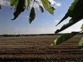 Kilátás a fák közül - panoramio.jpg