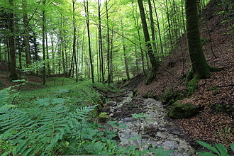 Sihlwald - A stream in the forest