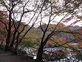 Kobe Municipal Arboretum in 2013-11-16 No,17.JPG