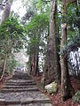 Kumano Kodo pilgrimage route Daimon-zaka World heritage 熊野古道 大門坂29.JPG