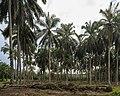 Kunak Sabah Mostyn-Oil-Palm-Museum-04.jpg