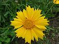 Kwiatek 53.jpg