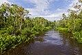 Landscape of theTanjung Puting National Park - Indonesia 1.jpg