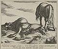 Landschap met dood paard. NL-HlmNHA 1477 53011522.JPG