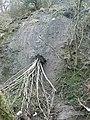 Landslide, Nant Wood - geograph.org.uk - 692213.jpg