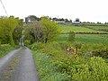 Lane at Corduff - geograph.org.uk - 1303515.jpg