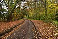 Lane through Kingswood Common - geograph.org.uk - 1048868.jpg