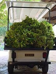 custom marijuana grow room
