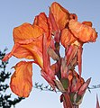 Large red flower.jpg