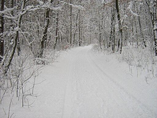 Las Golczewski zima