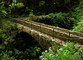 Laurissilva da Madeira 14.jpg