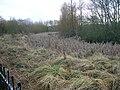 Lawthorn lochan site.JPG
