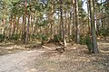 Leśny szlak - panoramio.jpg