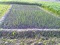 Lehsan - panoramio.jpg