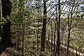 Leitenwälder der Isar 0594.jpg
