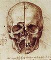 Leonardo Skull.jpg