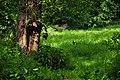 Leszállás - panoramio.jpg