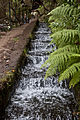 Levadas do Risco e 25 Fontes, Madeira - Aug 2012 - 05.jpg