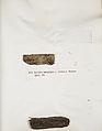 Lichenes Helvetici IX X 1833 015.jpg