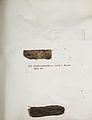 Lichenes Helvetici IX X 1833 016.jpg