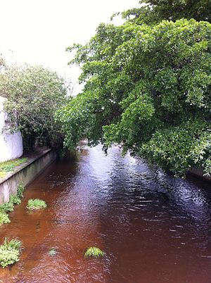 Liesbeek River - Liesbeek River in Rosebank
