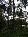 Liliw,Lagunajf5671 04.JPG