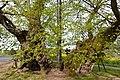 Linde-Reinborn-JR-E-5202-2021-05-09.jpg