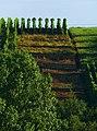 Lines - panoramio (2).jpg
