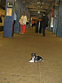 Little Man Shankbone riding the rails of the NYC subway 2.jpg