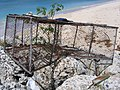 Lobster trap in Barbados 1.jpg