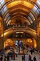 London - Cromwell Road - Natural History Museum XV.jpg