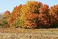 Longwood 2012 10 20 1311 (8679625404).jpg