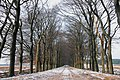 Lovely Beech lanes at Oud Reemst, even in winter attractive for walking - panoramio.jpg