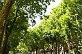 MADRID A.V.U. PASEO DEL PRADO-JARDINES - panoramio (24).jpg