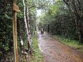 Macchabée Trail Crossroad (4823899820).jpg