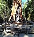 Mammutbaum Yosemite (22060971030).jpg