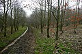 Managed woodland at Sparrowthorn - geograph.org.uk - 1105759.jpg