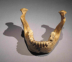 Mandibel from Mauer.JPG