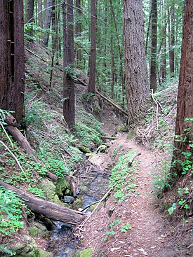 Marshall Creek, Ben Lomond, CA.jpg