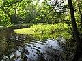 Mattaponi Wildlife Management Area, Virginia (7468016822).jpg