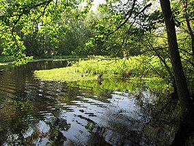 Mattaponi Wildlife Management Area, Virginia (7468016822).jpg