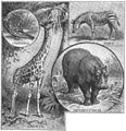 Maury Geography 123A African animals.jpg