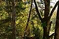 Mercer Slough Environmental Educational Center - view from the 'Treehouse' 04.jpg