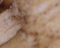 Microscopio - Tabla de madera de cocina 2.png