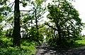 Mikolow, Poland - panoramio (75).jpg